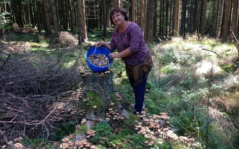 Любовь Селезнева: «Ложные грибы подстраиваются под съедобные»